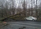 Fallen tree by a white car