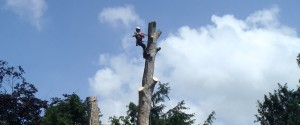 Fully trained and experienced arborists for all trees, shrubs and hedges in commercial properties or at your home