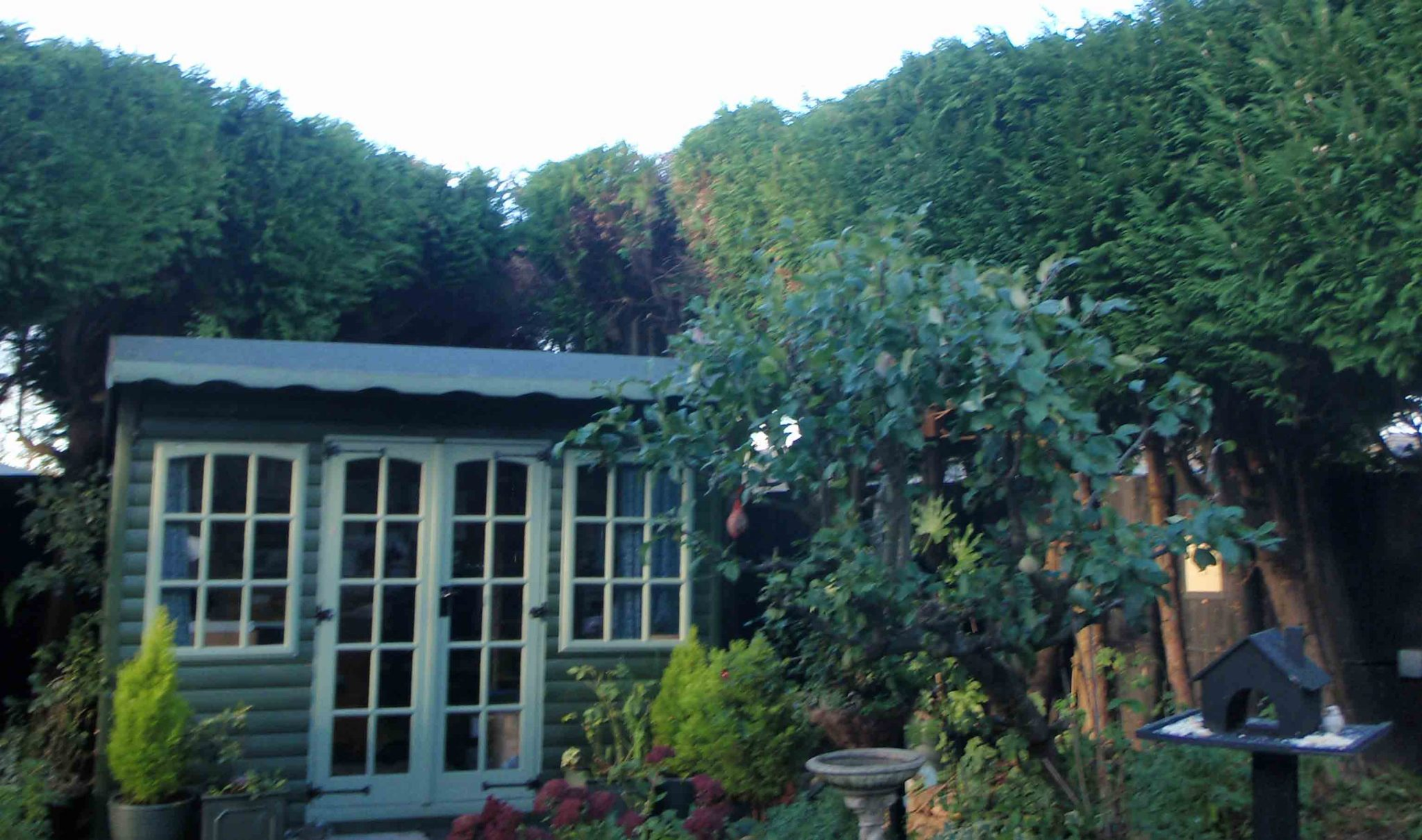 domestic image of chapel tree services
