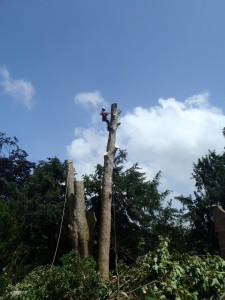 Man lopping branches off a tree