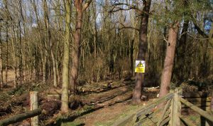 chapel tree removal forestry
