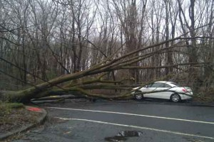 Fallen tree in the road by a white car