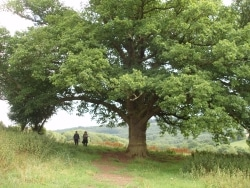 Two people walking past a tree