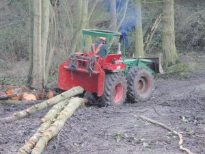 Man working in a forest cutting down trees